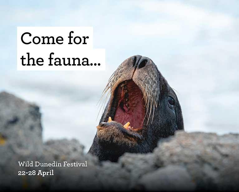 Come for the fauna - Wild Dunedin Festival