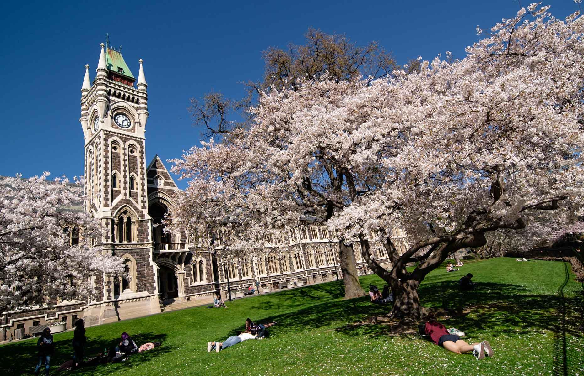 Spring in Dunedin