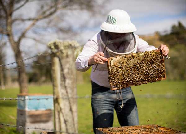 Blueskin Bay Beekeeper
