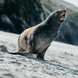 Dunedin Wildlife