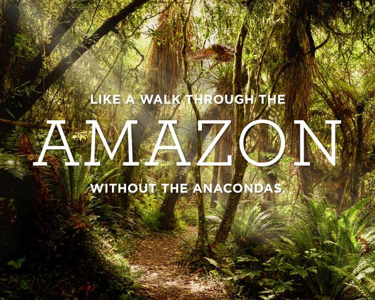 A pretty good plan D - Amazon