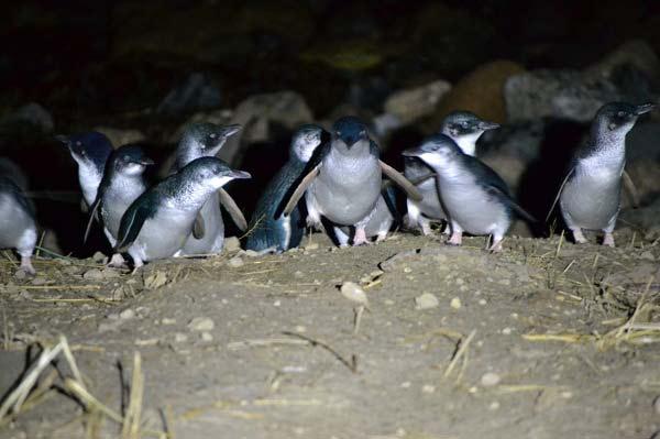 Wildlife Dunedin New Zealand