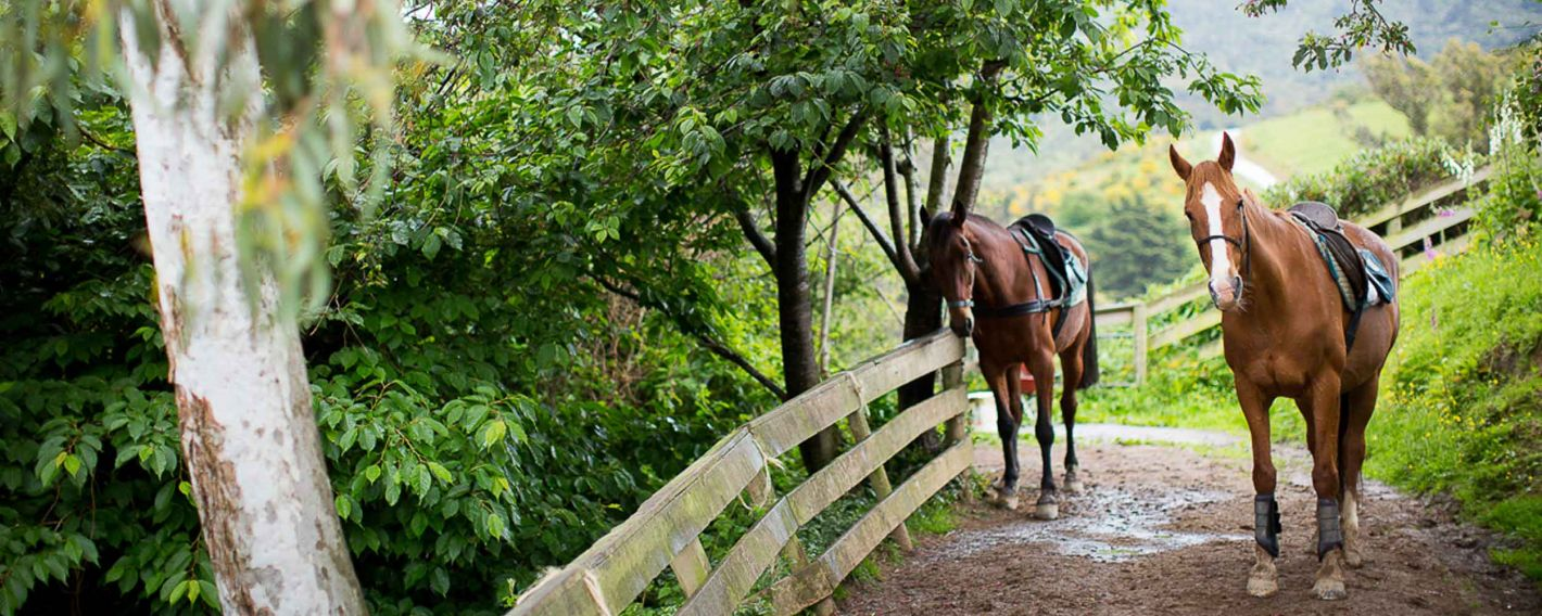 Hare Hill Horse Treks